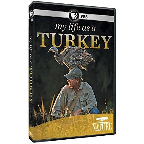 my life as a turkey sahalee off grid